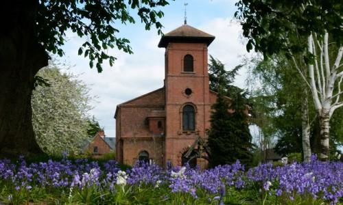 churchyard-bluebells